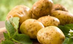 Лечение геморроя картофелем в домашних условиях
