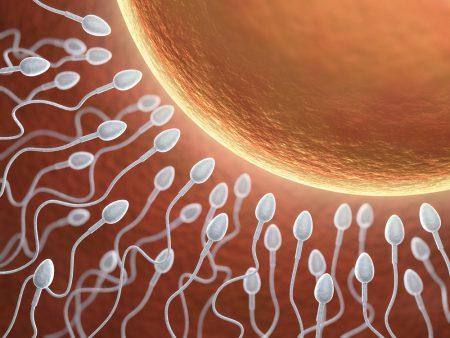 Как влияет пиво на сперматозоиды